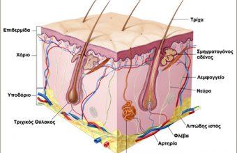Χειρουργική Παθήσεων Δέρματος - Υποδορίου